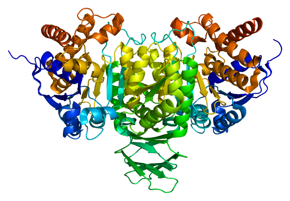 Protein_IDH2